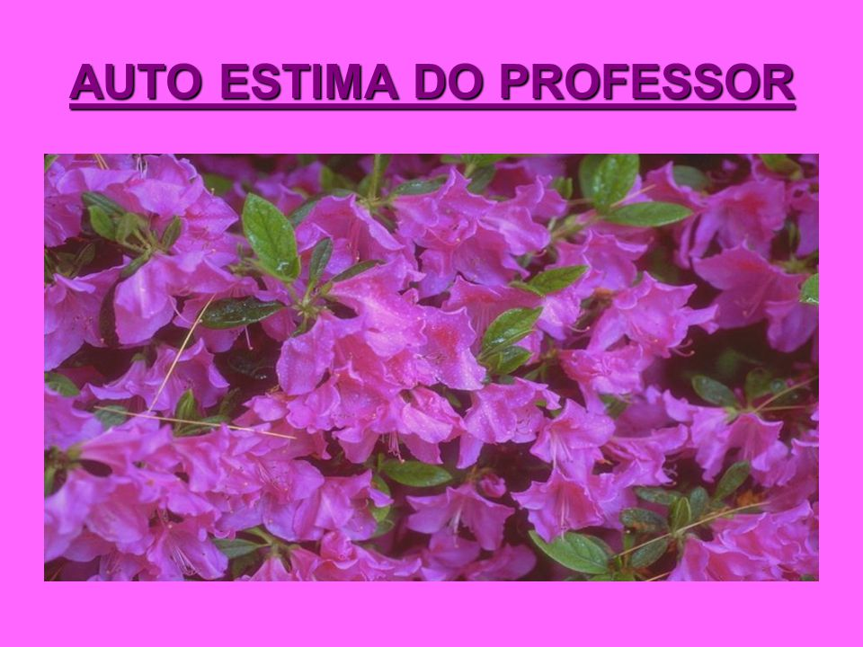 AUTO ESTIMA DO PROFESSOR
