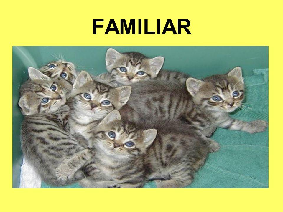 FAMILIAR