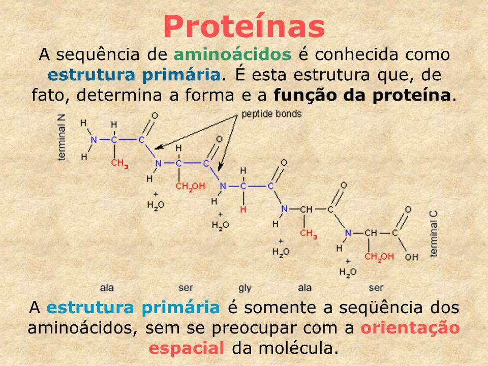 Proteínas A sequência de aminoácidos é conhecida como estrutura primária. É esta estrutura que, de fato, determina a forma e a função da proteína.