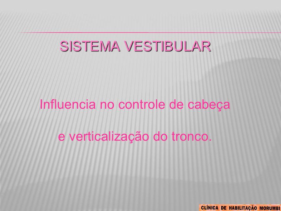 Sistema Vestibular Influencia no controle de cabeça