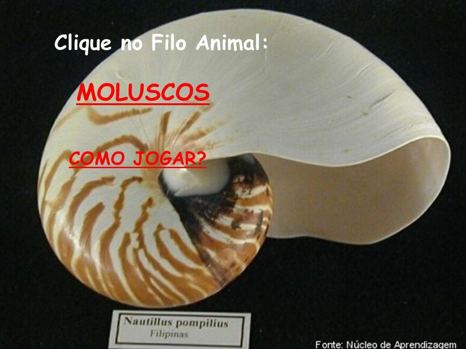 Clique no Filo Animal: MOLUSCOS COMO JOGAR