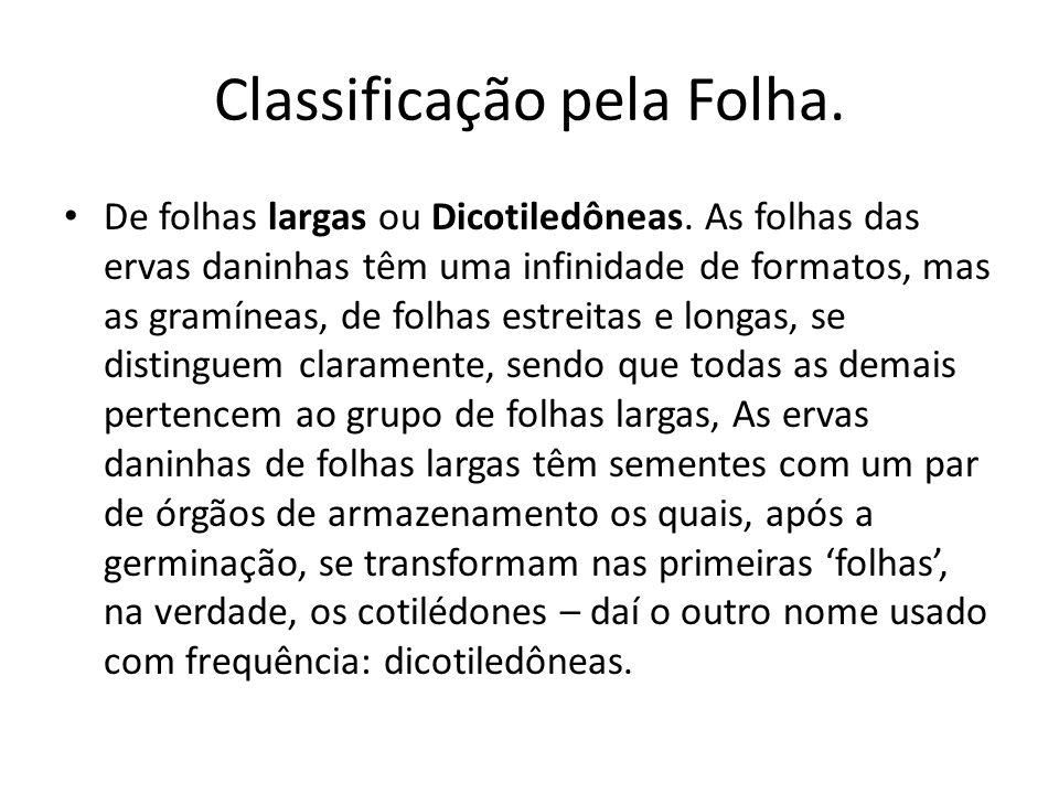 Classificação pela Folha.