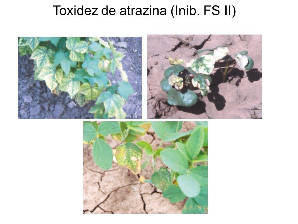 Toxidez de atrazina (Inib. FS II)