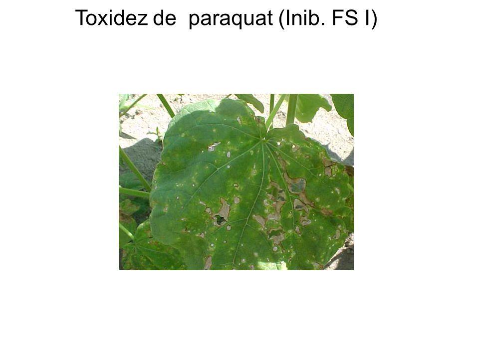 Toxidez de paraquat (Inib. FS I)