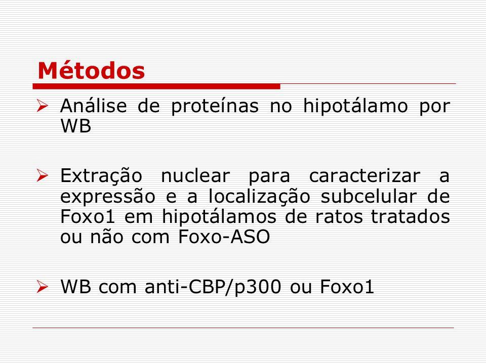 Métodos Análise de proteínas no hipotálamo por WB