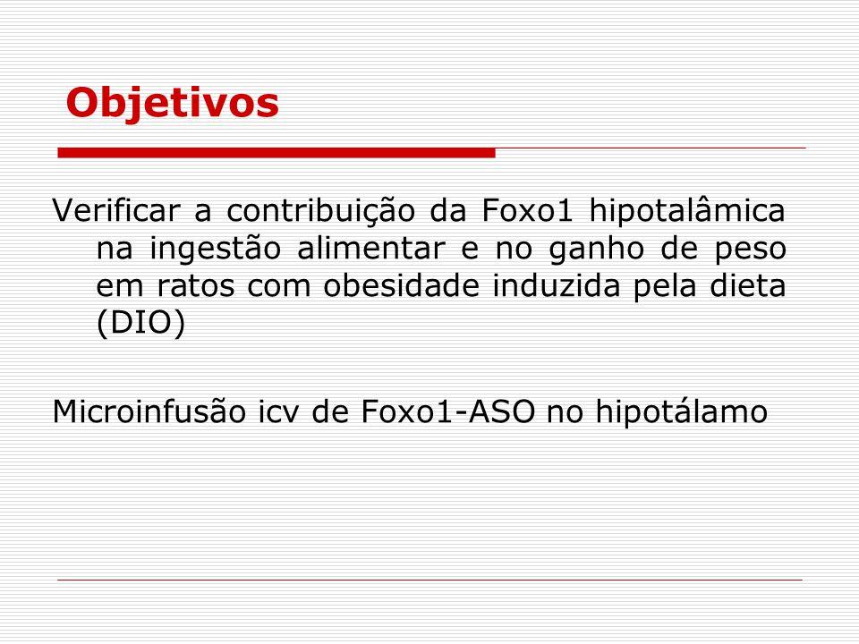 Objetivos Verificar a contribuição da Foxo1 hipotalâmica na ingestão alimentar e no ganho de peso em ratos com obesidade induzida pela dieta (DIO)