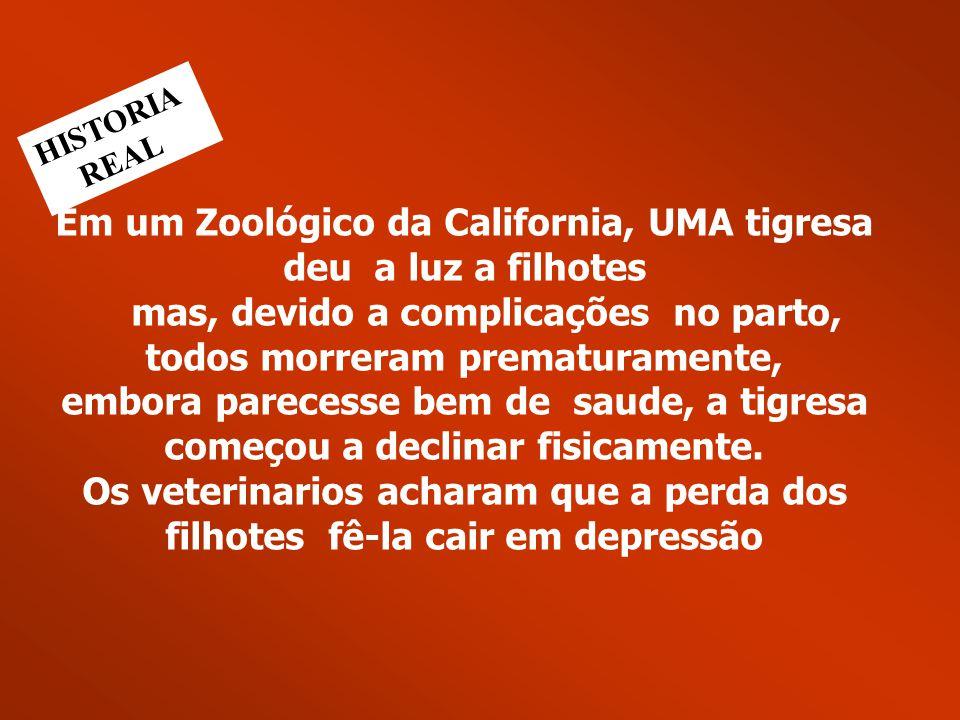 Em um Zoológico da California, UMA tigresa deu a luz a filhotes mas, devido a complicações no parto, todos morreram prematuramente, embora parecesse bem de saude, a tigresa começou a declinar fisicamente. Os veterinarios acharam que a perda dos filhotes fê-la cair em depressão