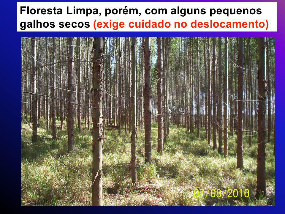 Floresta Limpa, porém, com alguns pequenos galhos secos (exige cuidado no deslocamento)