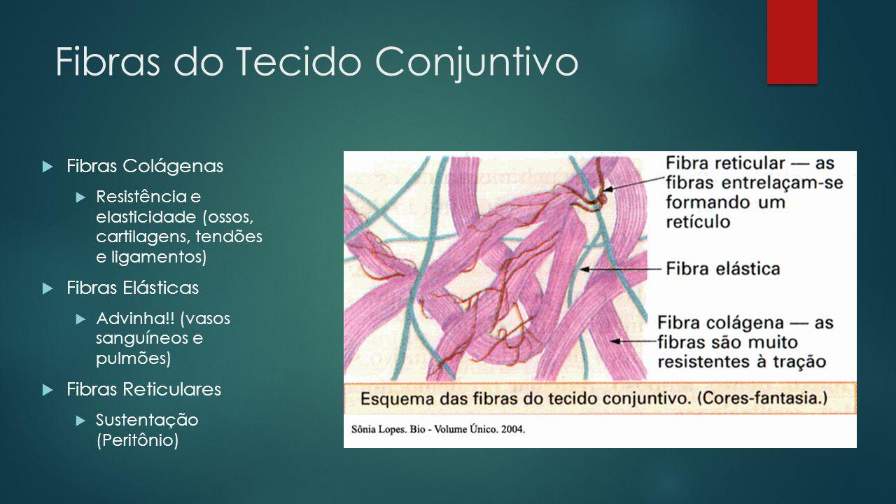 Fibras do Tecido Conjuntivo