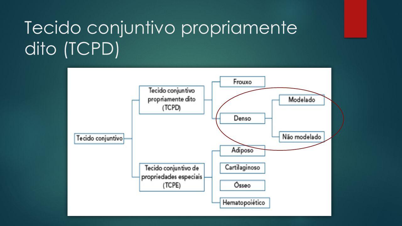 Tecido conjuntivo propriamente dito (TCPD)