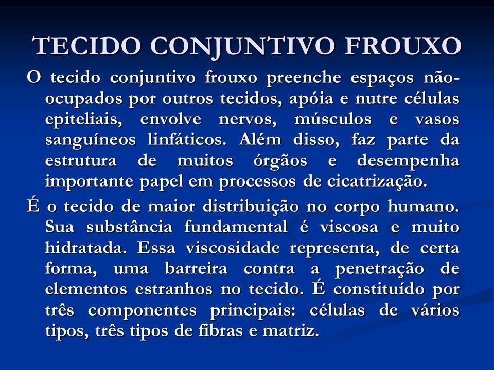 TECIDO CONJUNTIVO FROUXO