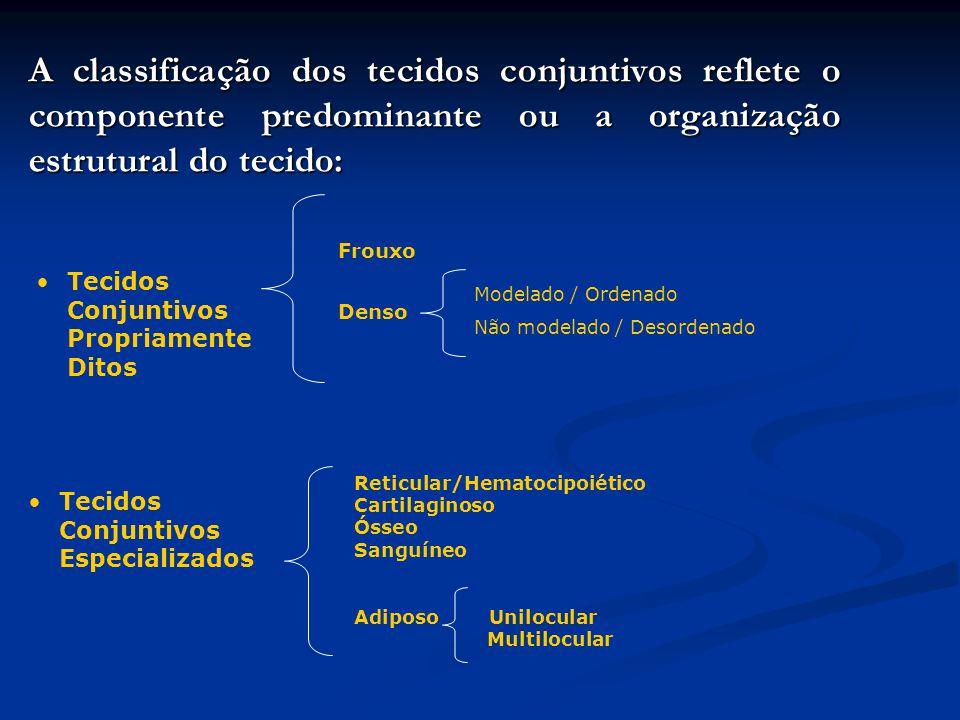 A classificação dos tecidos conjuntivos reflete o componente predominante ou a organização estrutural do tecido: