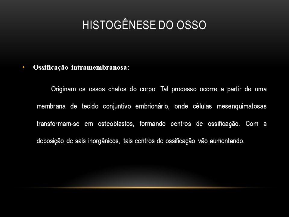 Histogênese do osso Ossificação intramembranosa: