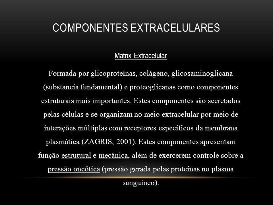 Componentes extracelulares
