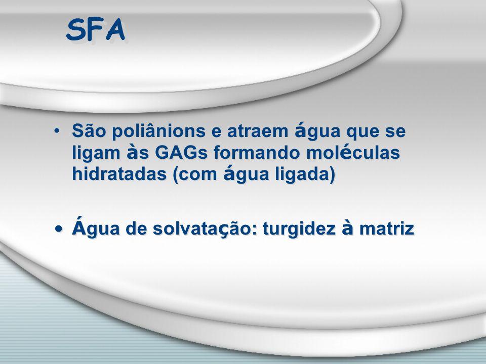 SFA São poliânions e atraem água que se ligam às GAGs formando moléculas hidratadas (com água ligada)
