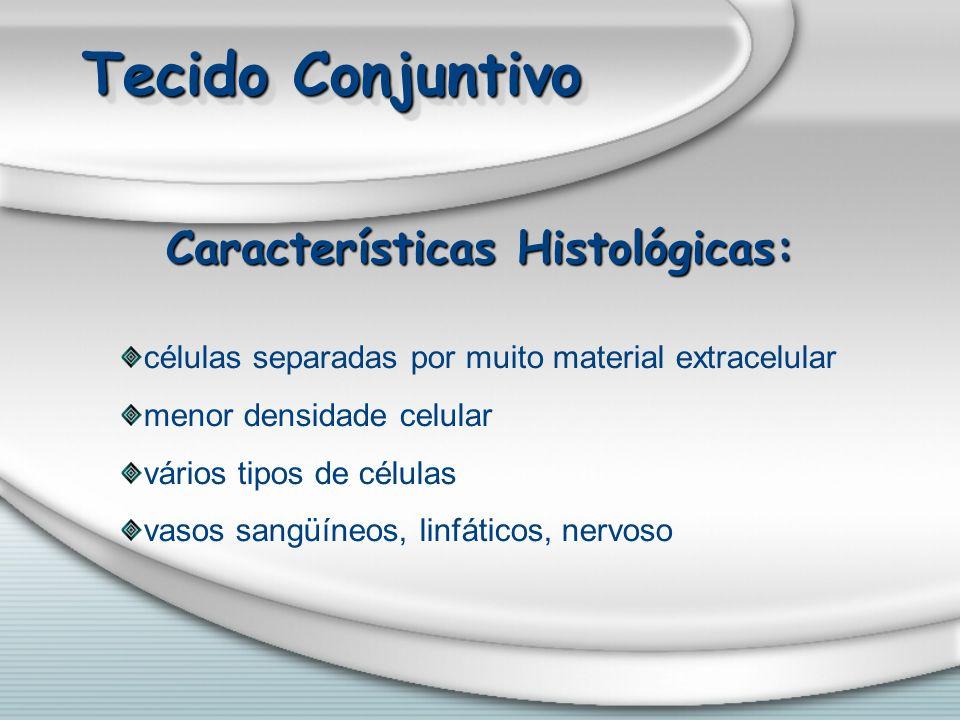 Características Histológicas: