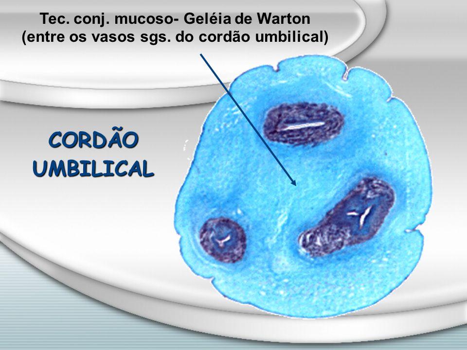 CORDÃO UMBILICAL Tec. conj. mucoso- Geléia de Warton