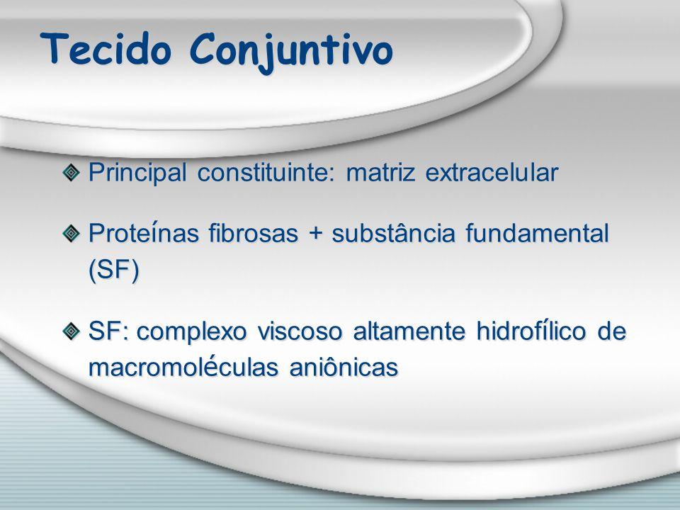 Tecido Conjuntivo Principal constituinte: matriz extracelular