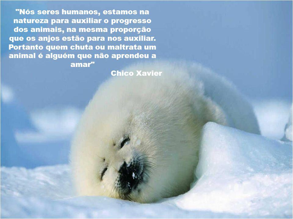 Nós seres humanos, estamos na natureza para auxiliar o progresso dos animais, na mesma proporção que os anjos estão para nos auxiliar. Portanto quem chuta ou maltrata um animal é alguém que não aprendeu a amar