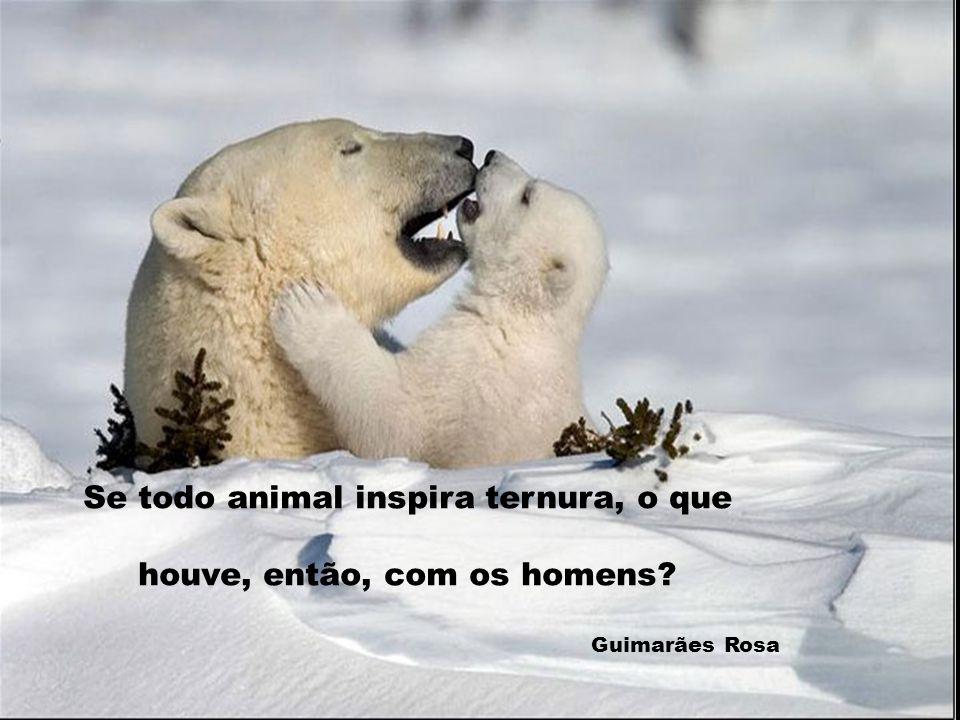 Se todo animal inspira ternura, o que houve, então, com os homens