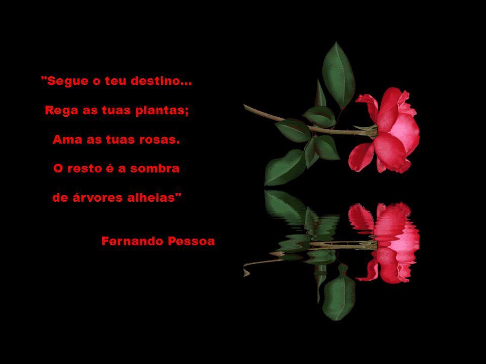 Segue o teu destino... Rega as tuas plantas; Ama as tuas rosas. O resto é a sombra. de árvores alheias