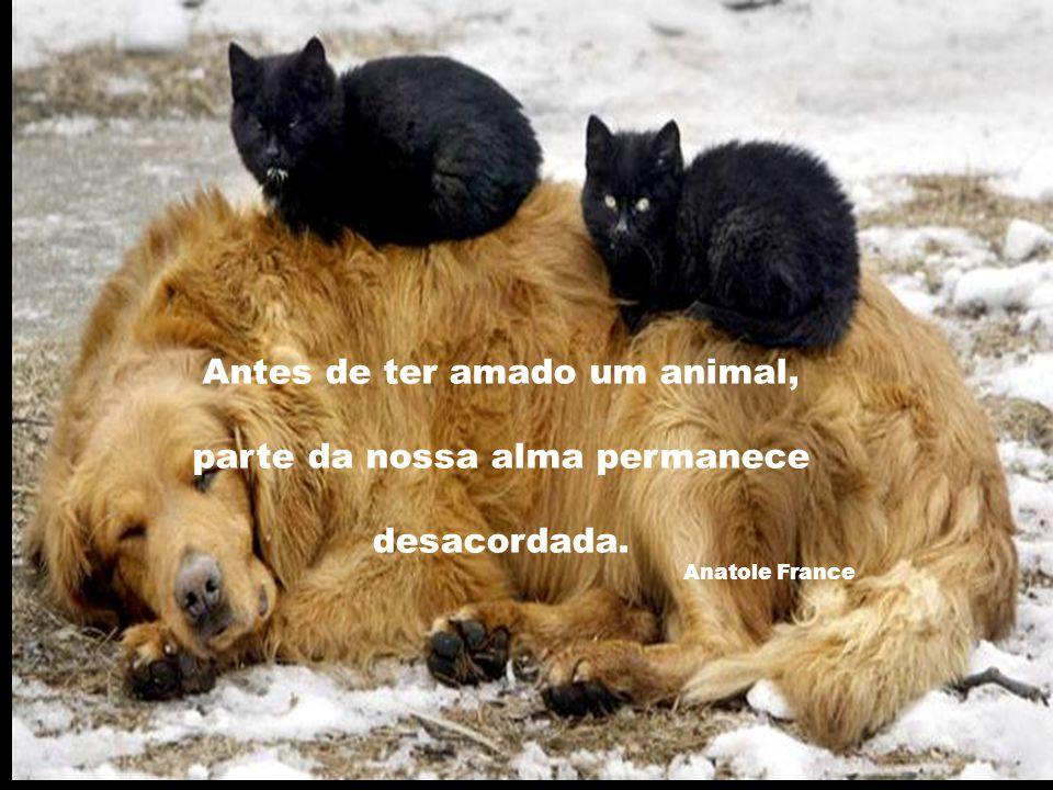 Antes de ter amado um animal, parte da nossa alma permanece