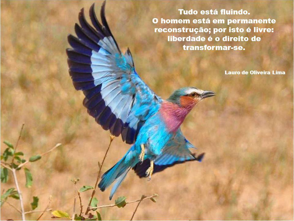 Tudo está fluindo. O homem está em permanente reconstrução; por isto é livre: liberdade é o direito de transformar-se.