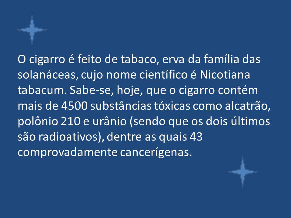 O cigarro é feito de tabaco, erva da família das solanáceas, cujo nome científico é Nicotiana tabacum.