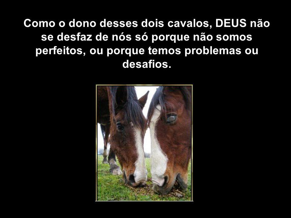 Como o dono desses dois cavalos, DEUS não se desfaz de nós só porque não somos perfeitos, ou porque temos problemas ou desafios.