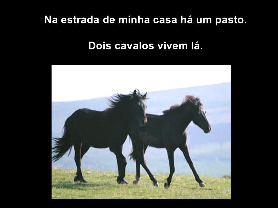 Na estrada de minha casa há um pasto. Dois cavalos vivem lá.