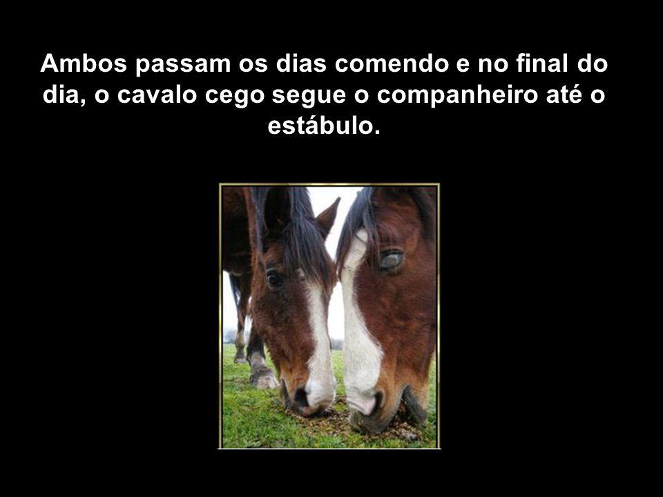 Ambos passam os dias comendo e no final do dia, o cavalo cego segue o companheiro até o estábulo.
