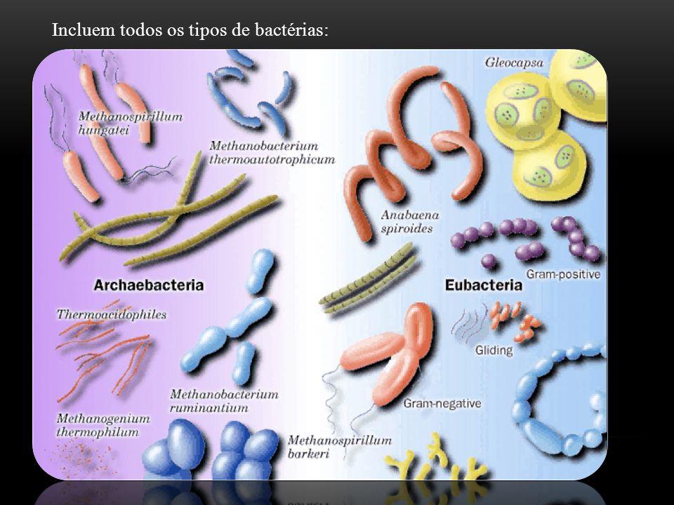 Incluem todos os tipos de bactérias: