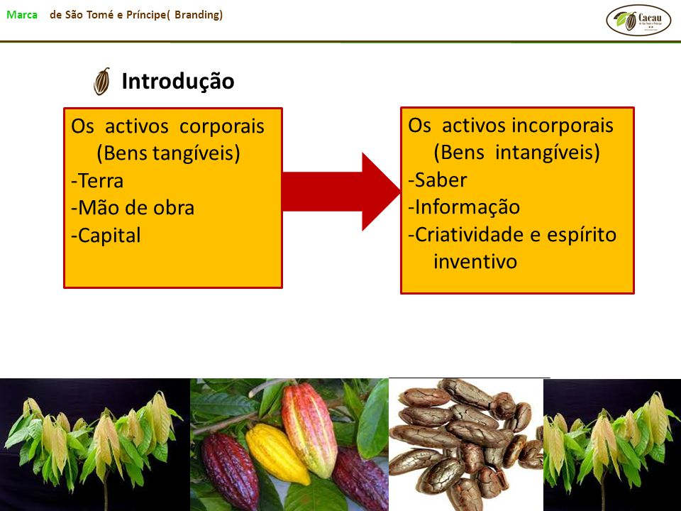 Introdução Os activos corporais (Bens tangíveis)
