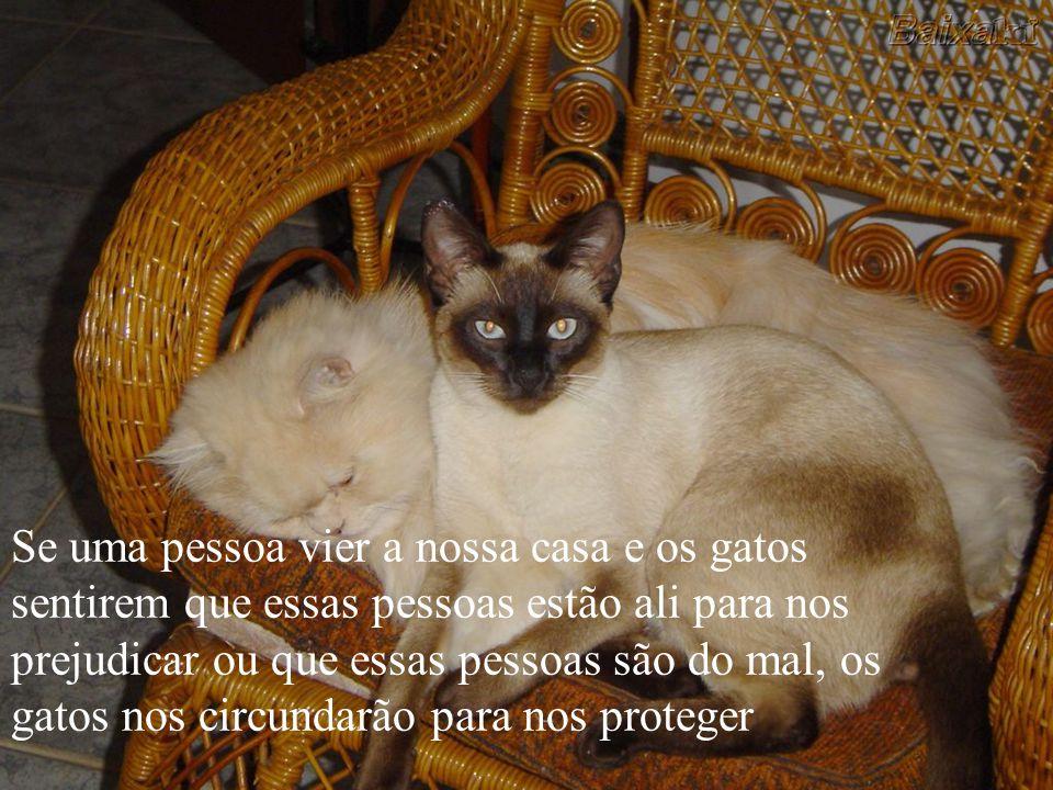 Se uma pessoa vier a nossa casa e os gatos sentirem que essas pessoas estão ali para nos prejudicar ou que essas pessoas são do mal, os gatos nos circundarão para nos proteger