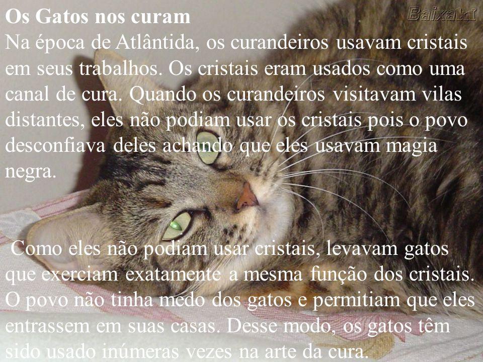 Os Gatos nos curam