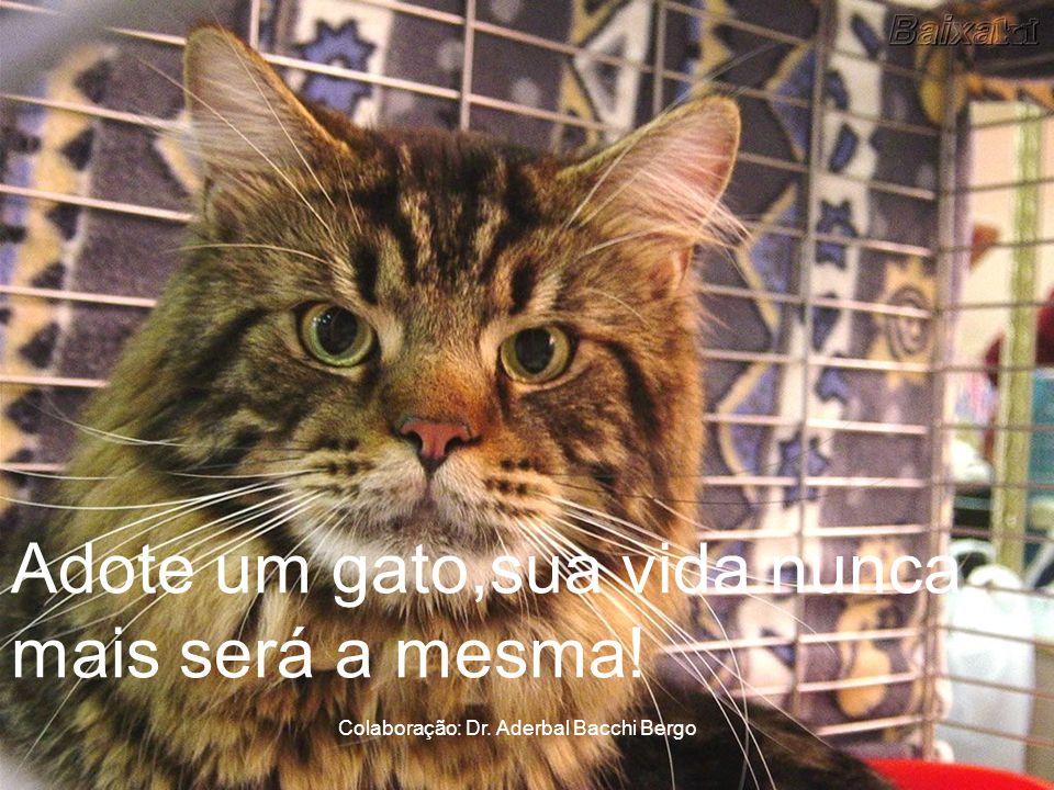Adote um gato,sua vida nunca mais será a mesma!