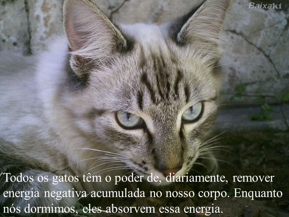 Todos os gatos têm o poder de, diariamente, remover energia negativa acumulada no nosso corpo.