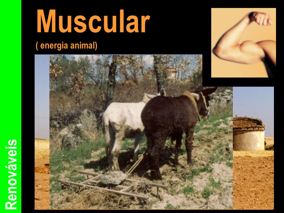 Muscular ( energia animal) Renováveis