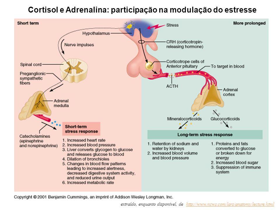 Cortisol e Adrenalina: participação na modulação do estresse