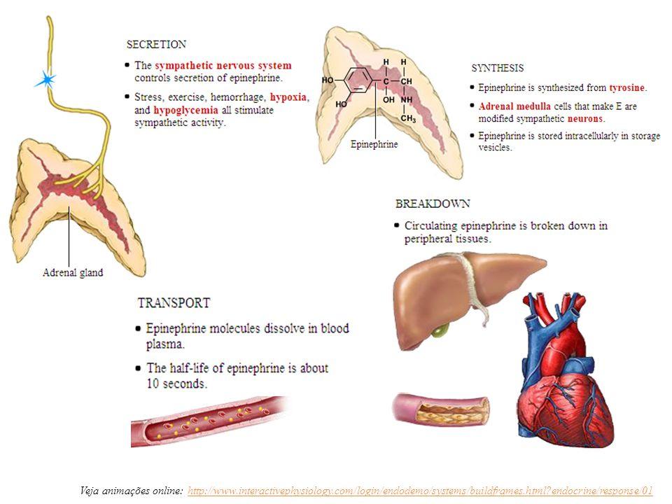 Veja animações online: http://www. interactivephysiology