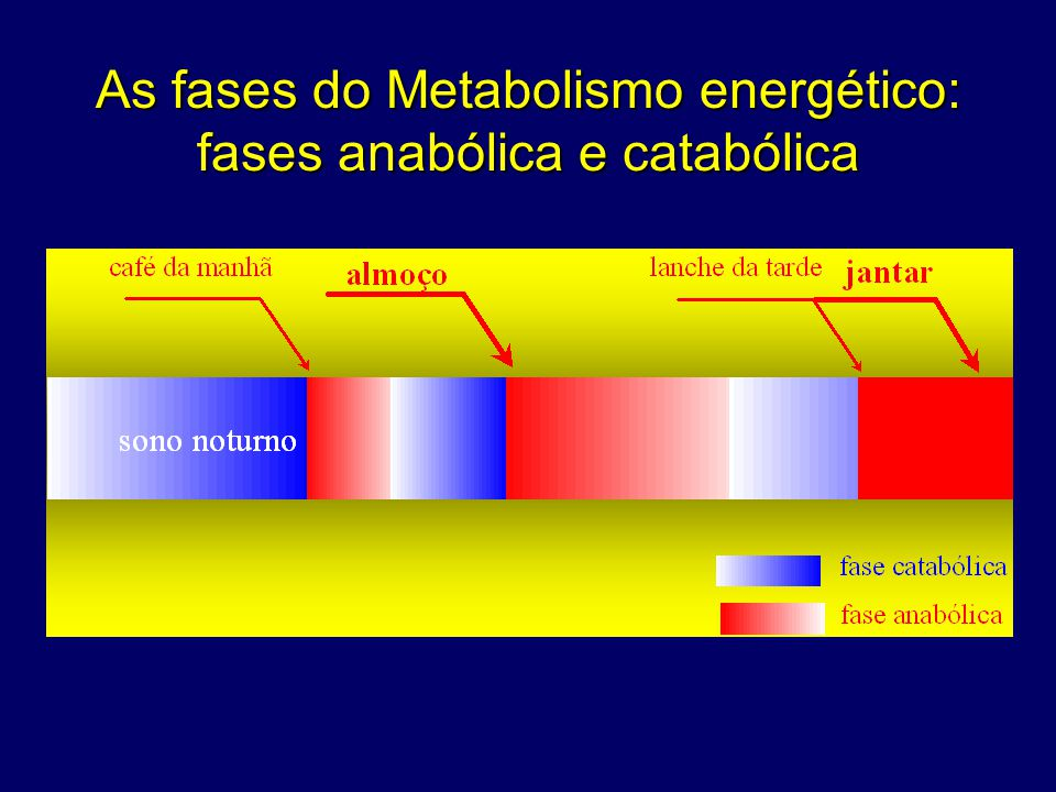 As fases do Metabolismo energético: fases anabólica e catabólica
