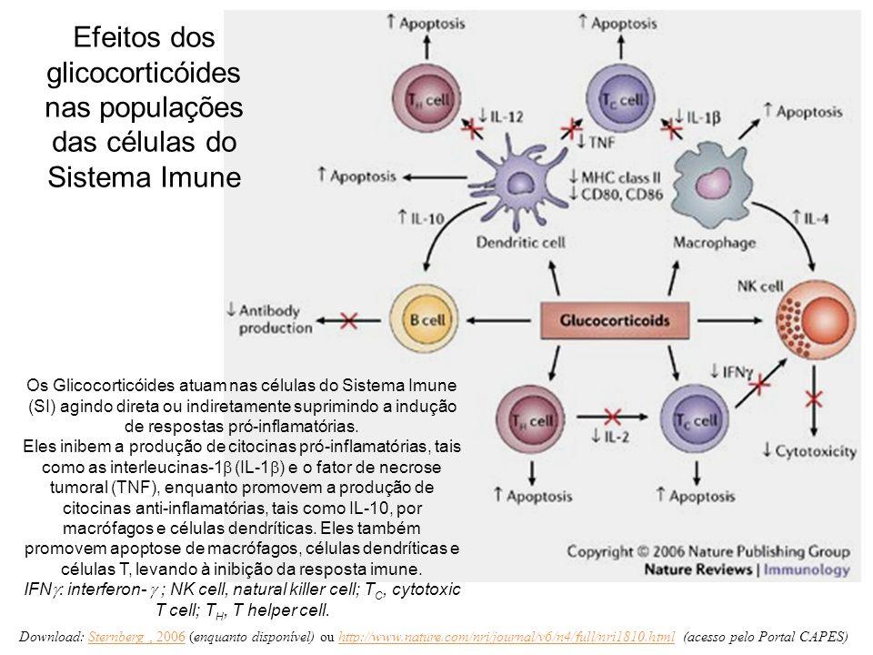 Efeitos dos glicocorticóides nas populações das células do Sistema Imune