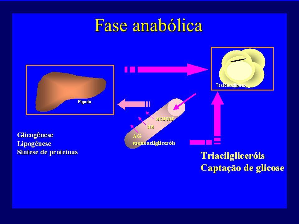 Fase anabólica http://fisio.icb.usp.br/