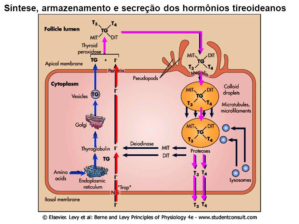 Síntese, armazenamento e secreção dos hormônios tireoideanos