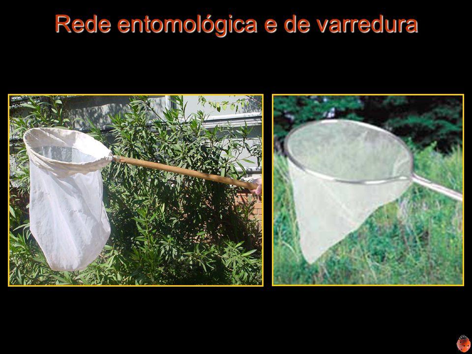 Rede entomológica e de varredura