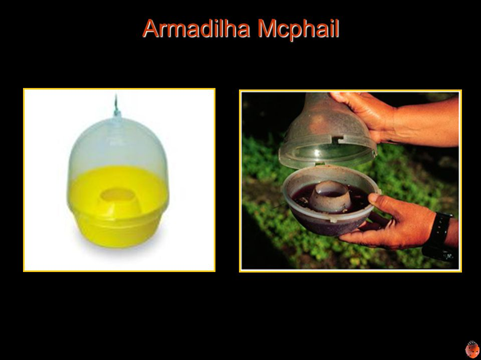 Armadilha Mcphail