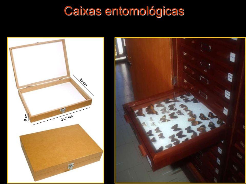 Caixas entomológicas 23 cm 33,5 cm 5 cm