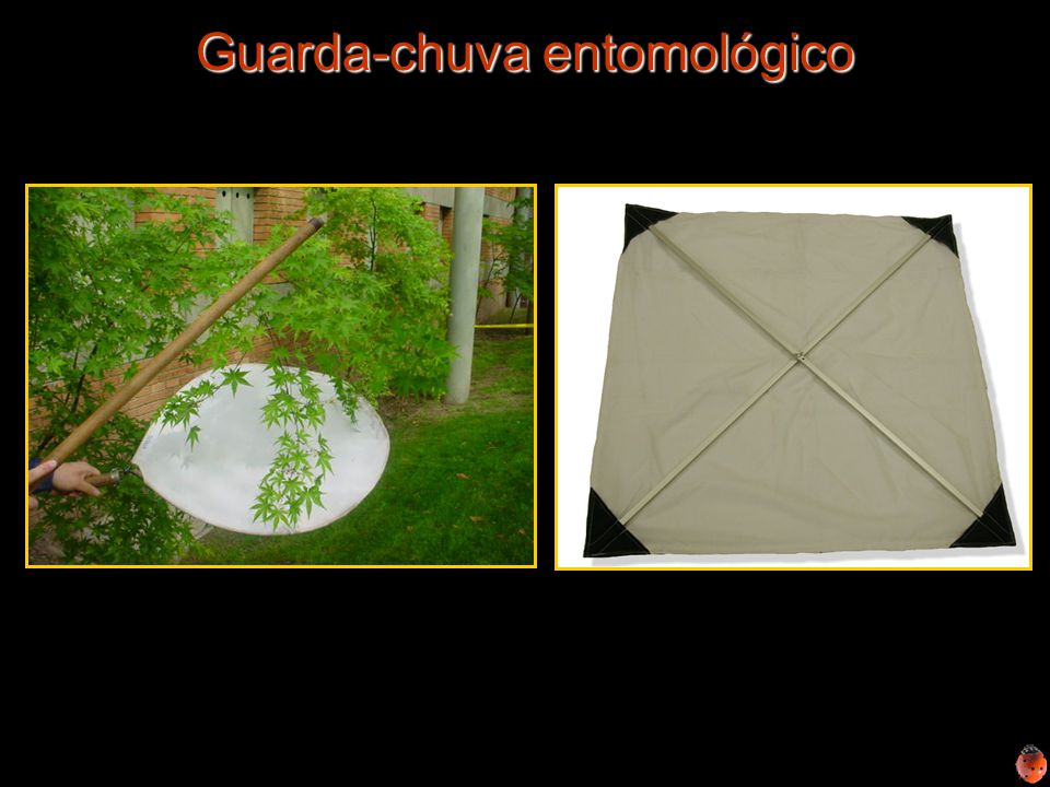 Guarda-chuva entomológico