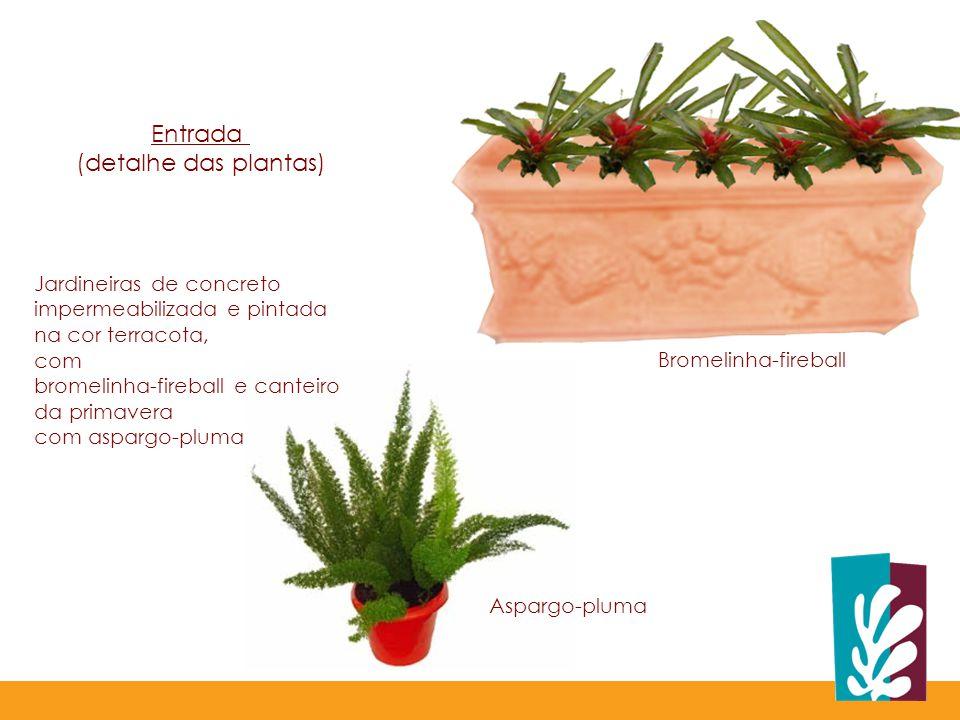 Entrada (detalhe das plantas)
