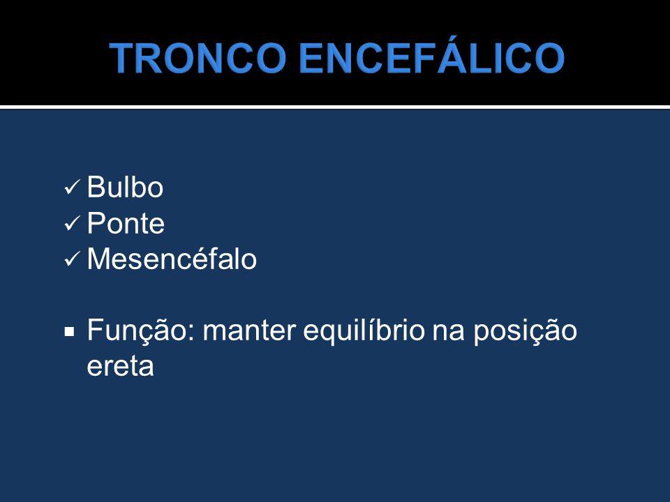 TRONCO ENCEFÁLICO Bulbo Ponte Mesencéfalo